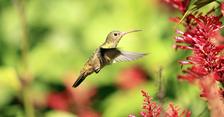 an image of a hummingbird brings to mind the question of how nonprofits can attract repeat donors